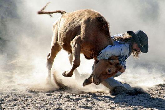 800px-Rodeo-Steer_wrestling