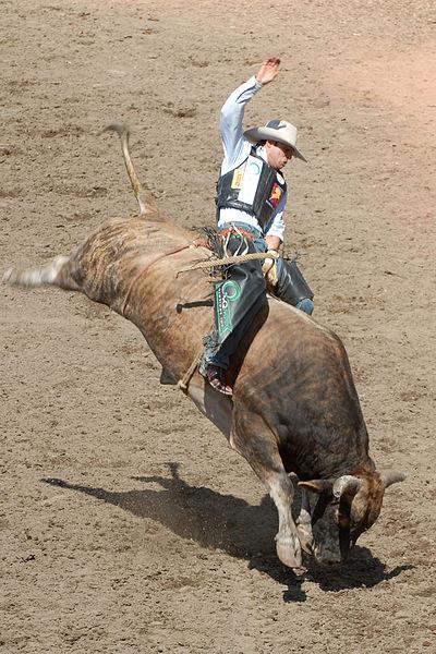 Bull-Riding2-Szmurlo