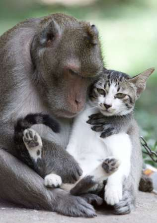 salim_virji_-_monkey_with_cat_by-sa